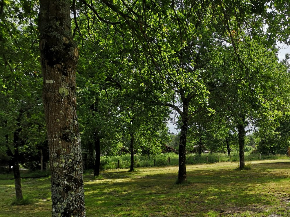 Aire camping-car à Salles (33770) - Photo 1